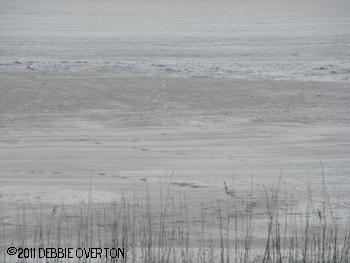 Debbie Overton St. Augustine Beach