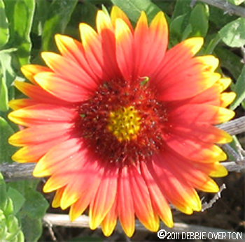 Debbie Overton Flowers at St. Augustine Beach