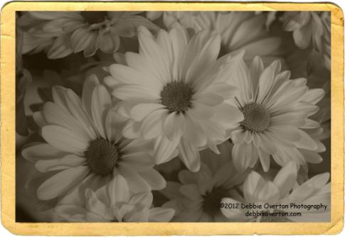 © 2012 Debbie Overton Photography