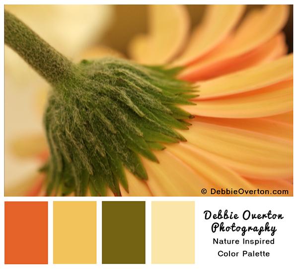 032214_deb_overton_color_palette_gerber_3167